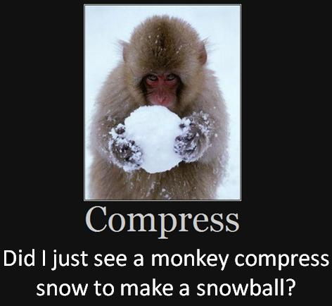 Did I just see a monkey compress snow to make a snowball?